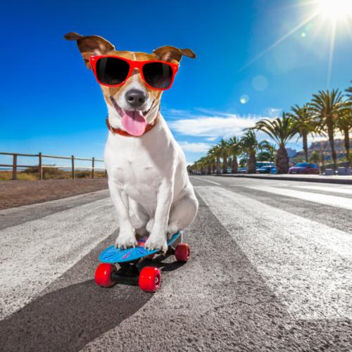 Artigos para Cães