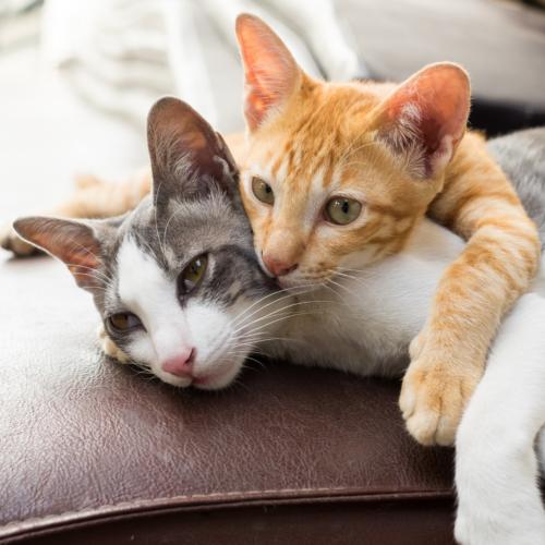 Artigos para gatos